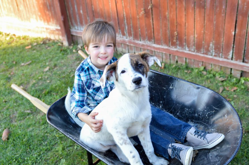 This is an image of a 5 year old boy sitting in a wheelbarrow with his hound mix puppy. Taking a break from their fall home maintenance checklist!